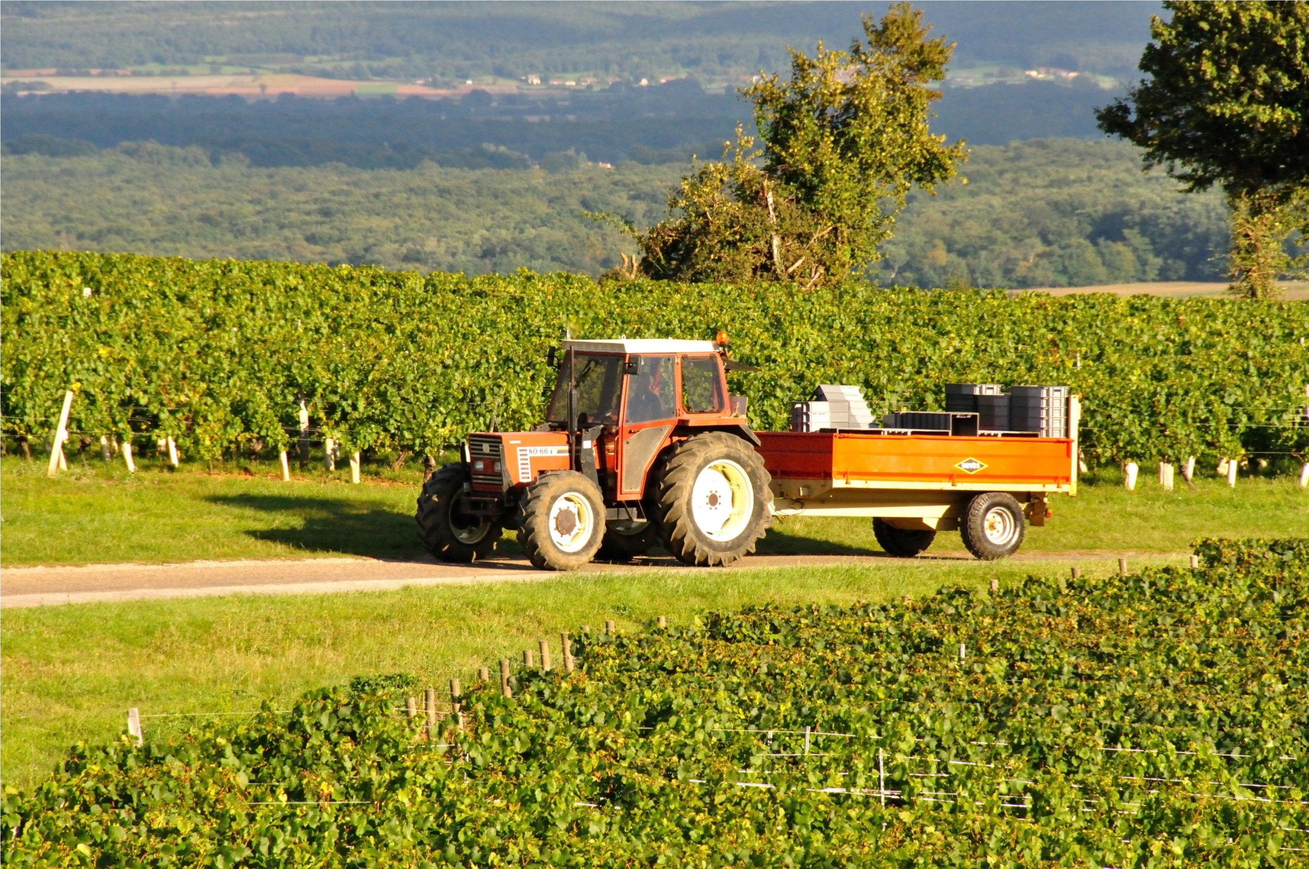 Panoramic image of a harvester